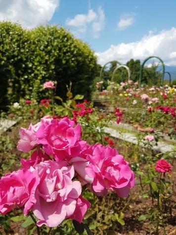 PARCO-PALLAVICINO-ROSE