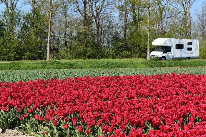 Camper per tutte le stagioni: dalla primavera come in questa foto con un campo di tulipani in fiore, all'estate e all'inverno.